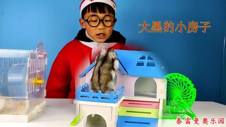 小泽给宠物仓鼠大黑打扫房间,更换水和食物,还换了木屑和新浴沙