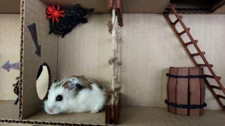 小仓鼠下到船舱里,身手敏捷闯过各个关卡!