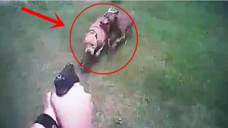 警察对狗说:小狗过来,3只狗真过来了,接下来难以置信