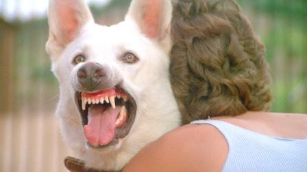 女孩捡回一条白狗,以为它是守护神,却不知它曾被恶魔训练