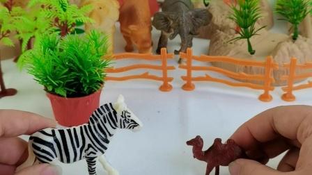 园里新来的小伙伴遇到了骆驼
