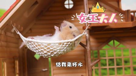 宠物搞笑剧:仓鼠情侣3个月后一胖一瘦的原因,你们都憋住别笑