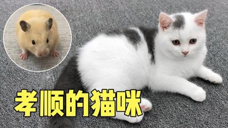 猫咪为主人付出太多,却被主人误会