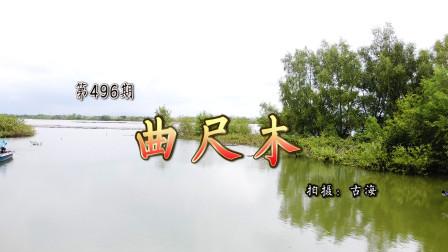 带你去观赏广东阳西母鸡山上的刘氏曲尺木