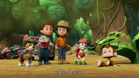 汪汪队立大功:狗狗也会唱歌,而且还很好听,动物们都着迷了