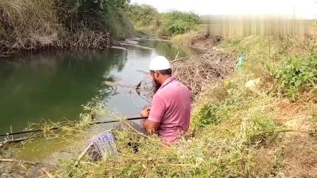 在这种地方钓鱼真惬意,大叔提竿就中鱼,都开始连竿了!