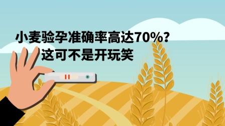 小麦验孕准确率高达70%?这可不是开玩笑