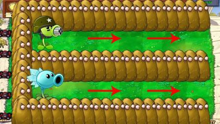 两排豌豆能否抵挡僵尸大军呢?植物大战僵尸