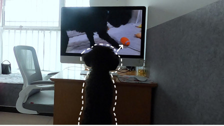 用视频逗狗,小泰迪看到最喜欢的玩具急得要说话