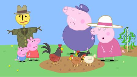 小猪佩奇:猪奶奶养了一群鸡,把猪爷爷菜园都糟蹋了,吃了个精光