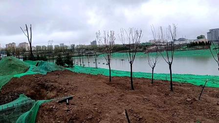 西峰东郊湖建设的怎么样了,去看看