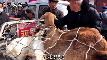 农村羊行价格猛涨,大小羊都论个卖,大哥一听价格吓懵了,不敢买