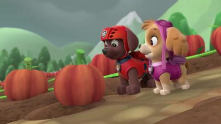 汪汪队:狗狗们采收水果,阿奇没有事做,显得有些落寞