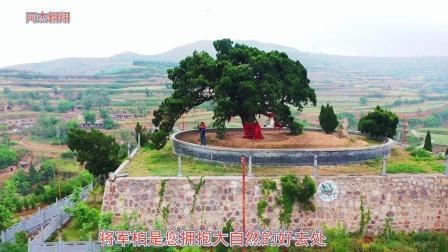 航拍河南三门峡唐洼将军柏,距今1800多年,历尽沧桑依旧枝繁叶茂!