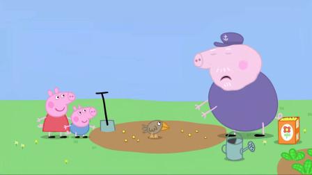 小猪佩奇:猪爷爷撒种子,一转眼却消失了,把他给搞懵了!