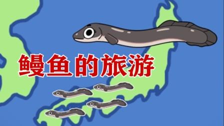 鳗鱼的旅游