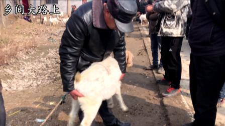 实拍农村羊行25块一斤贵吗,一只小羊卖到1200块,搁过去能买头牛