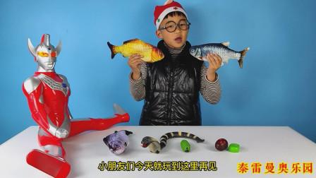 泰罗奥特曼给小泽变出遥控眼镜蛇和遥控毛毛虫,还有三条鱼玩具