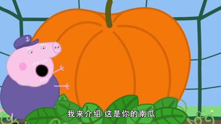 小猪佩奇:猪爷爷是种植高手,为实现佩奇的愿望,种了巨大的南瓜