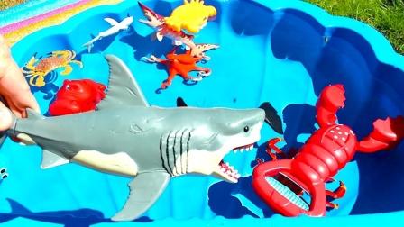 海洋小动物鲨鱼海龟小丑鱼玩具聚会