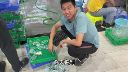 参加女儿学校的义卖捐款活动,5元一套泰国斗鱼,被小朋友围观了