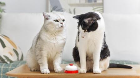 没想到啊!一个小小的铃铛训练,竟出了卧龙凤雏两位大猫