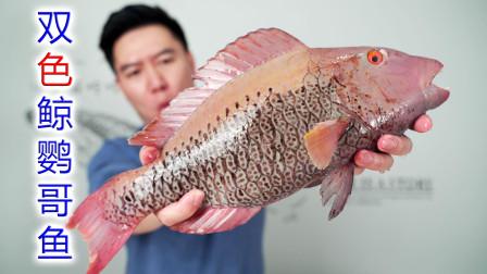 试吃非常罕见的双色鲸鹦哥鱼,做刺身很鲜甜,煎鱼排更惊艳