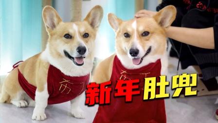 狗狗成精了,新年竟然自己拿红布料找主人做新衣服?结局有点搞笑