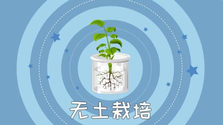 同学们,有一种种植技术叫做无土栽培,是一种让植物离开土壤也能正常生长的技术