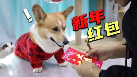 狗狗成精了,主人满脑坏心思教它认钱,没想到狗子竟然学会了?