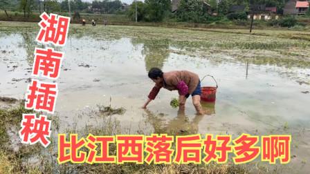 自驾旅行湖南看到村民插秧,最原始的方式,这方法比江西落后好多