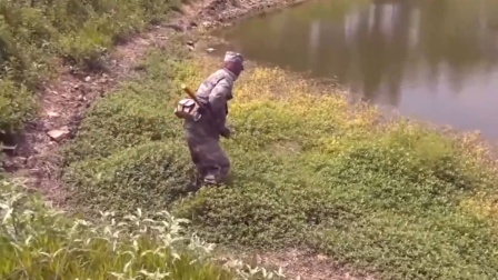 杂草丛中钓大黑鱼,还是传统钓好使,逗一下就上钩了!