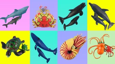 海洋动物都来开会啦
