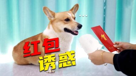 狗狗成精了,在妈妈和红包面前狗子竟然直接选钱?太现实了吧!