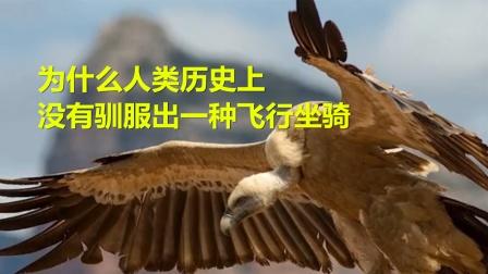 为什么人类历史上,没有驯服出一种,可作为飞行坐骑的动物呢?