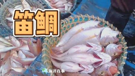 渔民最开心的画面,海鲜一筐筐!