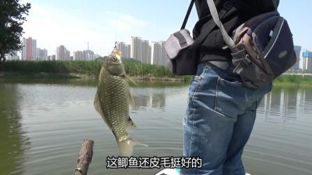 划船去河里追星钓鲤鱼,鲤鱼没钓到,黄金鲫钓的挺过瘾