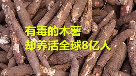 有毒的木薯,却养活全球8亿人,摇身一变成为富人美食