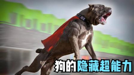 狗的10种隐藏的超能力,比人类还聪明,狗会多种语言!