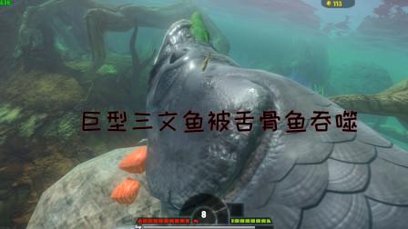 海底大猎杀:巨型三文鱼VS舌古鱼!三文鱼被舌古鱼吞噬