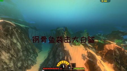 海底大猎杀:钢骨鱼VS大白鲨!钢骨鱼极速袭击大白鲨能成功吗