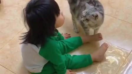 狸花猫:自己带大的娃,咋瞅咋稀罕!没事儿就想多看她两眼!