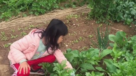 五一假期回农村老家,2姐弟把姥姥种的萝卜拔光了
