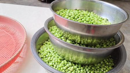 新鲜的豌豆吃不完怎么办?教你一招保存方法,随吃随取,放一年不坏