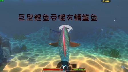 海底大猎杀:巨型鲤鱼VS灰鲭鲨鱼!鲤鱼张开嘴巴能吞噬鲨鱼吗