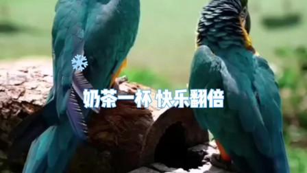 鬼迷心窍翻唱MTV鹦鹉动画图