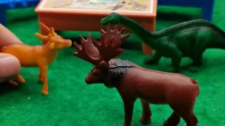 小鹿和梅花鹿在聊些什么呢