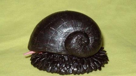 地球上唯一被铁黑化的生物,连子弹都打不穿,人称:海底万磁王!