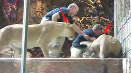 """雄狮发狂撕咬饲养员,母狮也冲进来""""帮忙"""""""