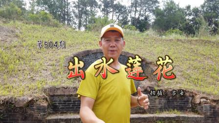 带你去看广西平南有着319年历史的清代古墓出水莲花